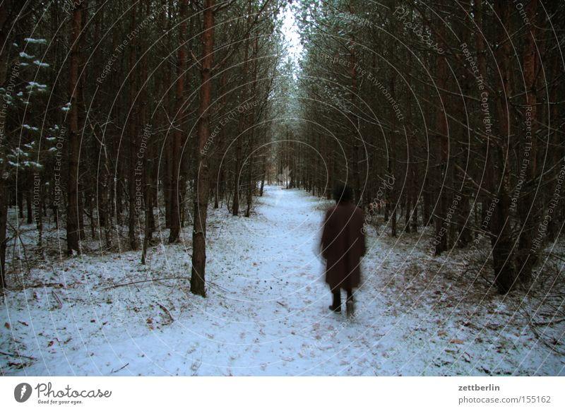 Mutter im Wald Mensch Winter Wald dunkel Schnee Traurigkeit Wege & Pfade Angst wandern Trauer gefährlich Spaziergang bedrohlich Hinweisschild Fußweg Panik