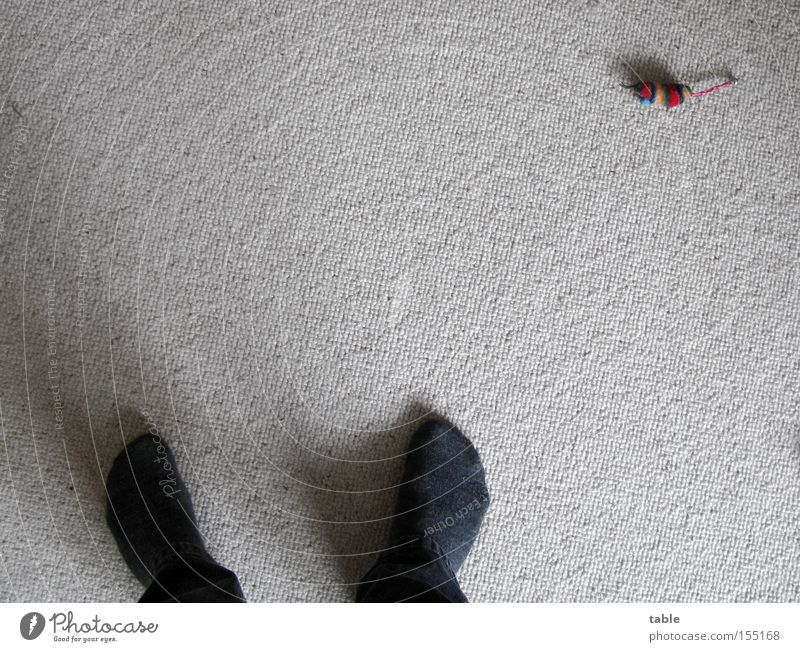 keiner spielt mit mir... Mann Tier Fuß Katze Wohnzimmer Langeweile Strümpfe Maus Haustier Teppich Hosenbeine