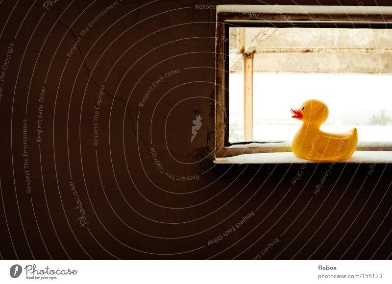 Schwarz auf Gelb Badeente Ente gelb Fenster Fensterbrett Schnee Aussicht hell dunkel Licht Fabrik Tier Vogel Winter
