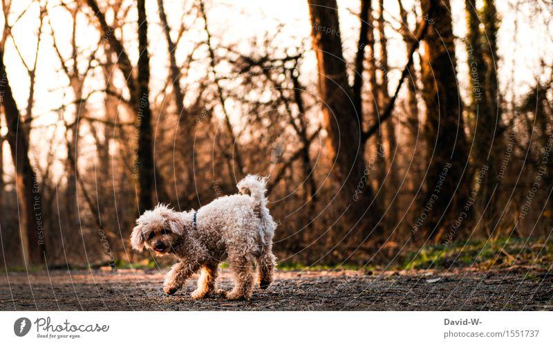 Spaziergang Hund Natur schön Landschaft Tier Wald Umwelt Herbst Bewegung Spielen klein Zufriedenheit Freizeit & Hobby Lebensfreude beobachten niedlich