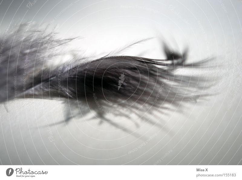 graues Gefieder Detailaufnahme Makroaufnahme weich kuschlig leicht Feder Dekoration & Verzierung Basteln Boa Daunen Vogel