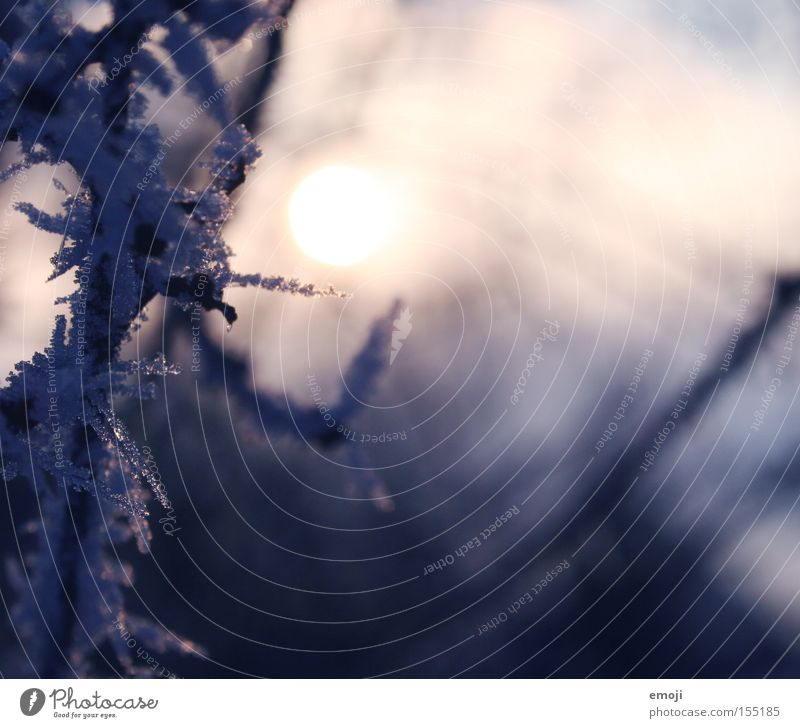 eiskalt II Natur blau Pflanze Winter Schnee Eis Frost Ast Makroaufnahme