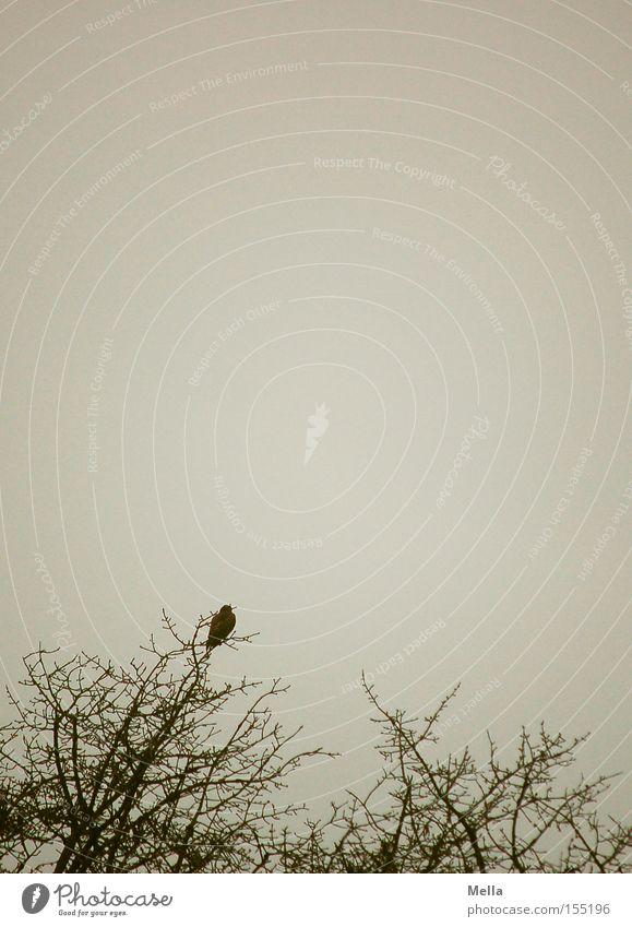 Bussardwinter Umwelt Natur Baum Tier Vogel 1 hocken sitzen natürlich trist grau Einsamkeit Baumkrone Ast Zweig Geäst trüb Farbfoto Außenaufnahme Menschenleer