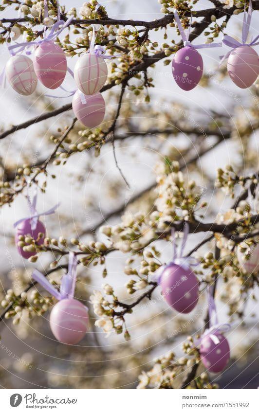 Purpurrote Ostereier, die an einem blühenden Pflaumenbaum hängen elegant Freude harmonisch Dekoration & Verzierung Ostern Natur Frühling Baum Blume Blüte