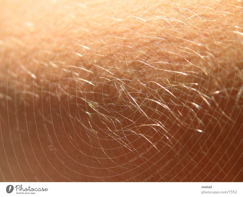 Haare Mensch Haare & Frisuren Makroaufnahme
