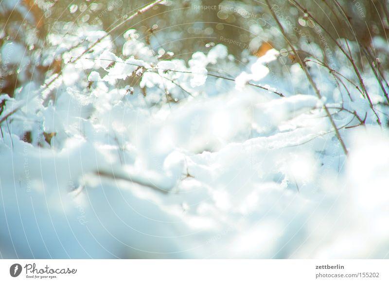 Schnee und Eis Landschaft Neuschnee Licht glänzend strahlend Freiheit Spaziergang Treptow Winter Sträucher Ast Unterholz Zweig Raureif Fluss Bach