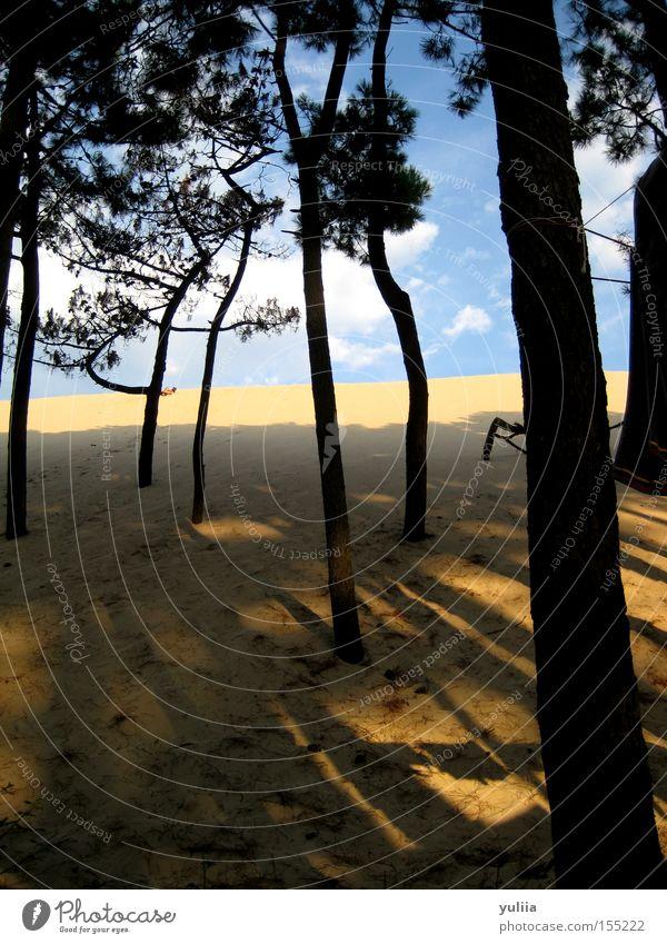 Sanddüne Strand Baum Pinie Himmel Wolken Stranddüne Schatten Steigung