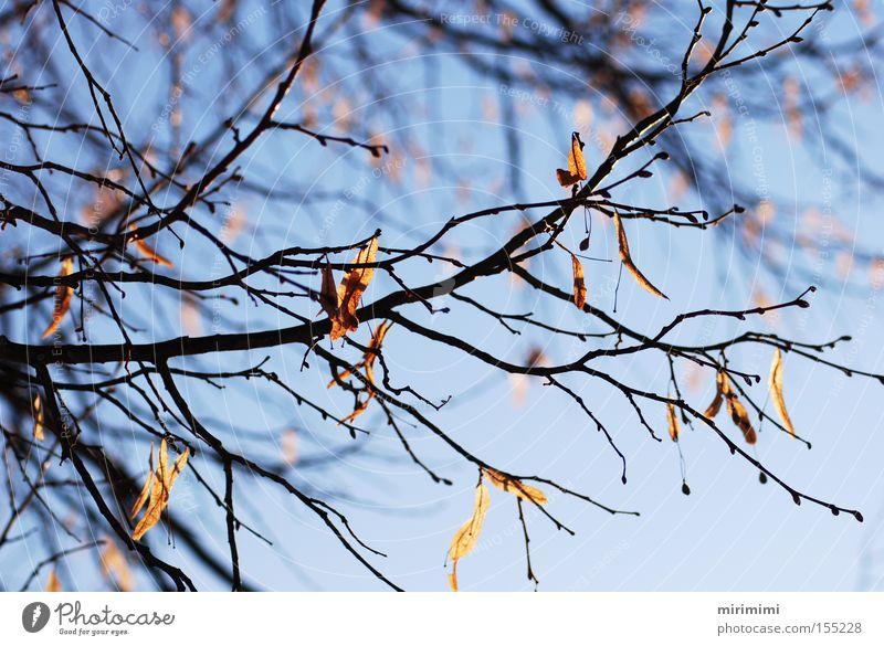 Herbstreste II Baum blau Winter Blatt Landschaft Ast