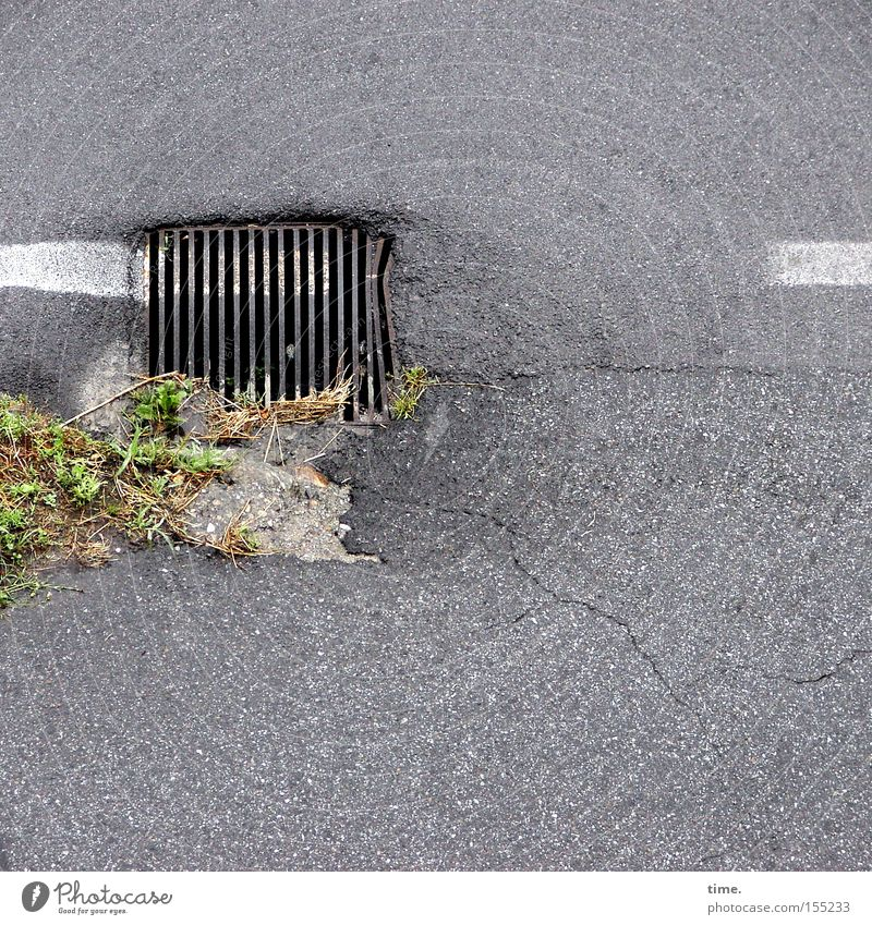Pinselclown Grünpflanze Verkehrswege Straße Metall unbeständig Farbe Abfluss Gully Asphalt Gitter Eisen Vorschrift Detailaufnahme Gras Menschenleer Wege & Pfade