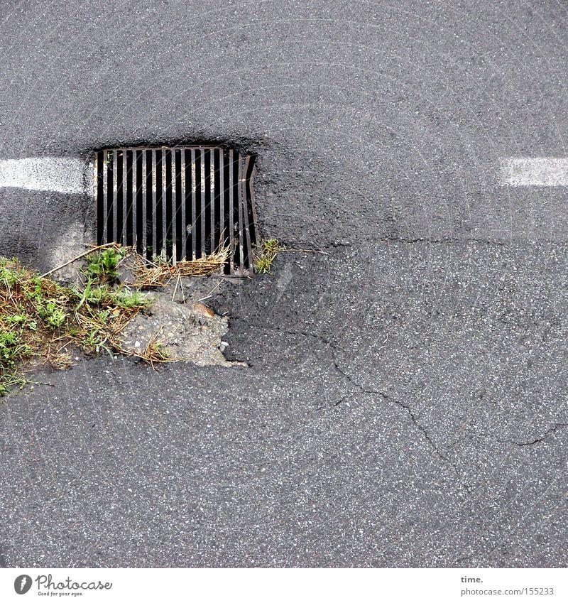 Pinselclown Straße Farbe Gras Wege & Pfade Metall Asphalt Verkehrswege Straßenbelag Eisen Gully Abfluss Gitter Grünpflanze Gesetze und Verordnungen unbeständig Fahrbahnmarkierung