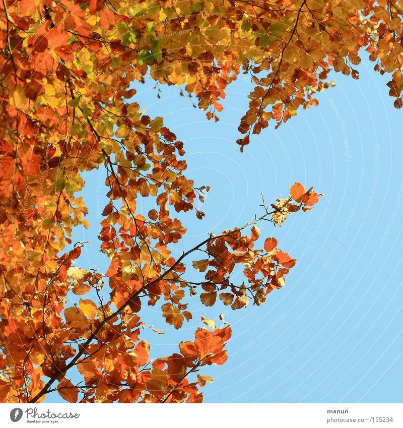 Bunter Rahmen Natur Baum ruhig Blatt Herbst gold mehrfarbig Vergänglichkeit Oktober herbstlich Erntedankfest Herbstfärbung