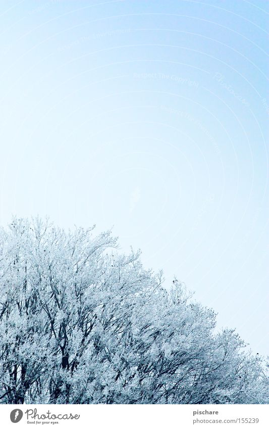 Winterzauber die 2. Himmel blau Baum kalt Schnee Eis Frost Raureif