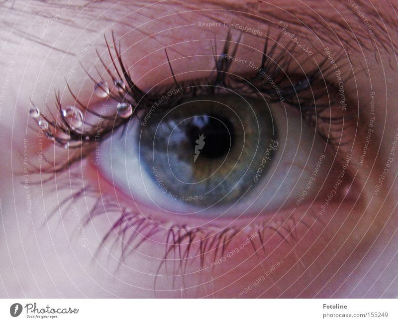 Augentröpfchen Wimpern Wassertropfen Augenbraue Augenfarbe Blick Farbe blau grau Pupille Linse Mensch Oculus Momentaufnahme