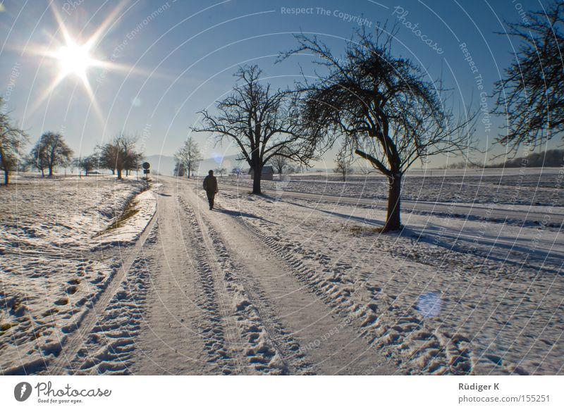 Allein spazieren Mensch Himmel Baum Sonne Winter Einsamkeit Schnee Wege & Pfade Spaziergang 7