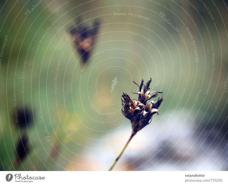 Du brauchst mich Blume Pflanze Wiese getrocknet vertrocknet Blütenknospen Blattknospe Gras Makroaufnahme Detailaufnahme Stengel Nahaufnahme Nahfotografie