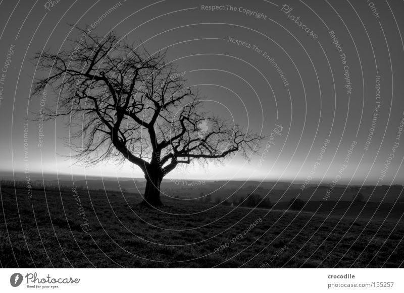 Verwachsen Baum Einsamkeit Winter kahl Ast Holz Baumstamm Natur Berge u. Gebirge Hügel Dämmerung dunkel Angst kalt beklemmend Panik Schwarzweißfoto spukhaft