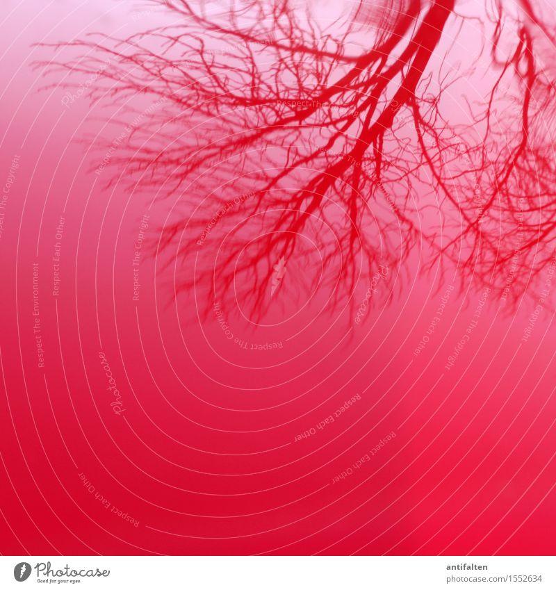 red Umwelt Natur Landschaft Pflanze Himmel Wolkenloser Himmel Frühling Winter Schönes Wetter Eis Frost Wärme Baum Ast Zweig Zweige u. Äste Baumstamm Baumkrone