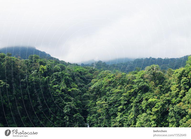 in the dschungle Natur Ferien & Urlaub & Reisen Pflanze schön grün Baum Blatt Wolken Ferne Wald außergewöhnlich Freiheit Regen Tourismus Nebel Ausflug