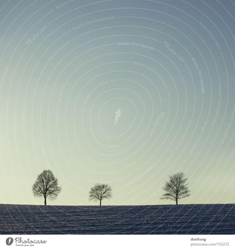 Weil einfach einfach einfach ist. Baum grün blau Winter ruhig Einsamkeit dunkel Schnee hell Stimmung Feld Horizont 3 Sehnsucht Konzentration