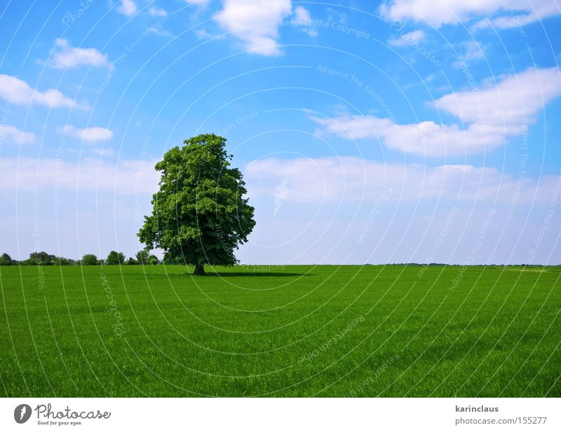 Natur Baum grün blau Wolken Wiese Gras Landschaft Feld Industrie Rasen Weide Grasland ländlich