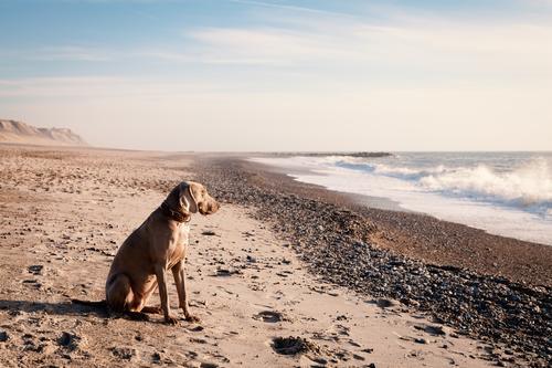 Abendsonne Hund Ferien & Urlaub & Reisen Sommer Wasser Sonne Meer Erholung Wolken Tier Ferne Strand Freiheit Sand Wellen Wind Schönes Wetter