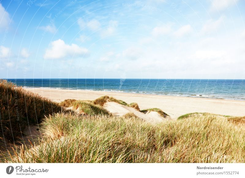 Sommer in den Dünen Himmel Natur Ferien & Urlaub & Reisen Wasser Sonne Meer Erholung Landschaft Wolken Strand Gras Sand Luft Wind Schönes Wetter