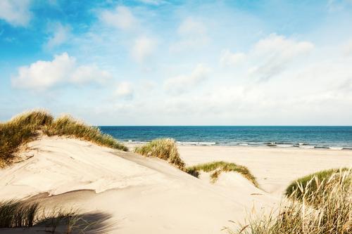 Sommer in den Dünen Natur Ferien & Urlaub & Reisen Wasser Sonne Meer Landschaft Wolken Ferne Strand Gras Freiheit Sand Horizont Tourismus Idylle