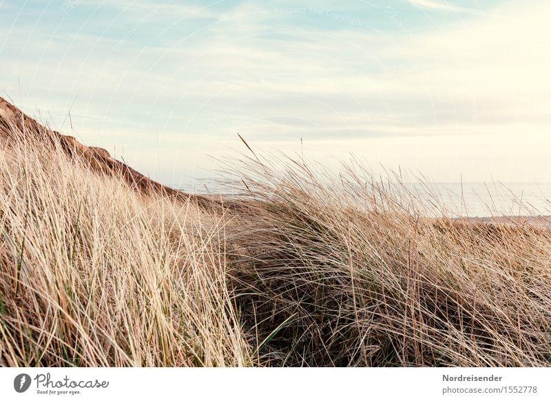 Dünengras Himmel Natur Ferien & Urlaub & Reisen Pflanze Meer Erholung Landschaft Einsamkeit Wolken ruhig Strand Gras Küste frisch Idylle Schönes Wetter