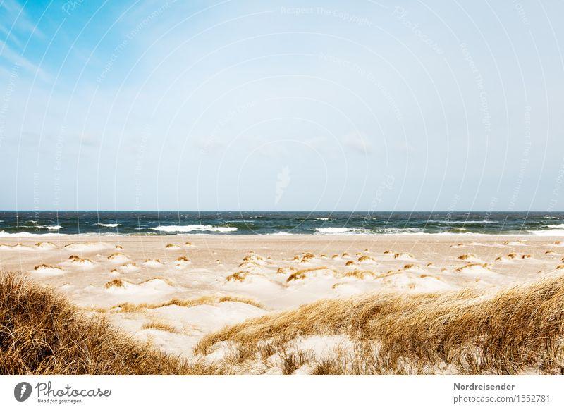 Durchatmen Natur Ferien & Urlaub & Reisen Sommer Wasser Meer Landschaft Einsamkeit ruhig Ferne Strand Frühling Gras Sand Horizont Wind Schönes Wetter