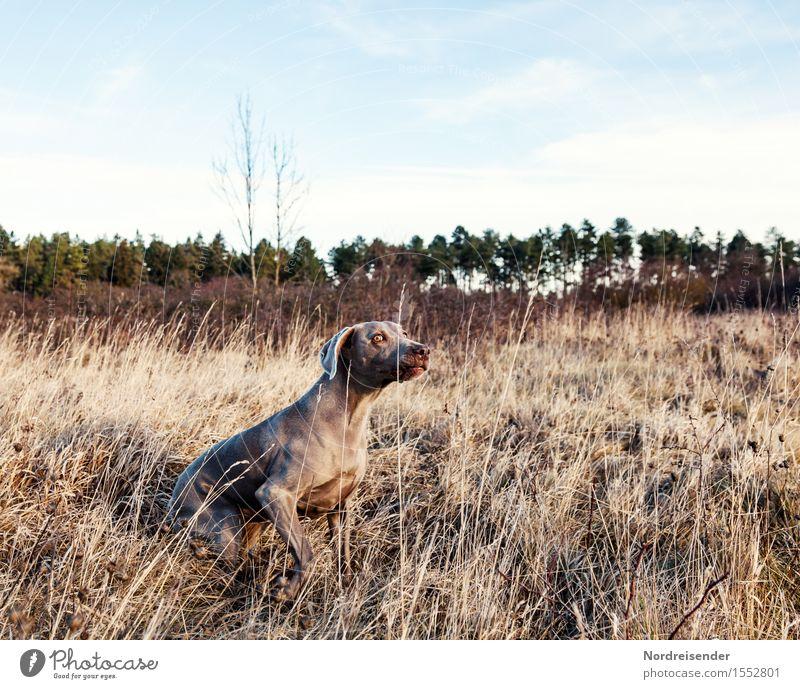 Jagdfieber Hund Natur Pflanze Landschaft Tier Wald Herbst Frühling Wiese Gras Spielen Freizeit & Hobby warten beobachten Schönes Wetter Neugier