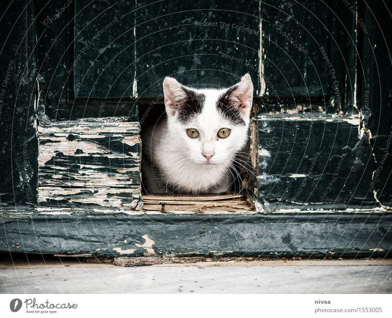 Katzenklappe Ferien & Urlaub & Reisen Ausflug Städtereise Sommerurlaub Dorf Menschenleer Haus Gebäude Mauer Wand Tür Tier Haustier 1 Tierjunges Holz beobachten