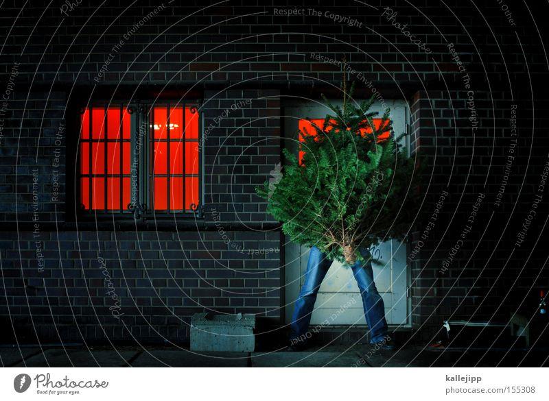 rauswurf Weihnachten & Advent Weihnachtsbaum Tür Straße Biomüll Güterverkehr & Logistik Schmuck Baum Tanne Fenster rot Feste & Feiern vor die tür