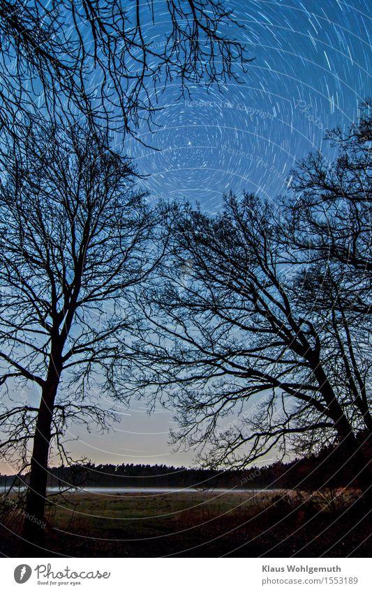 Panta rhei Umwelt Landschaft Himmel Nachthimmel Stern Horizont Frühling Winter Nebel Baum Gras Wiese Wald Salow drehen leuchten gruselig blau grau schwarz