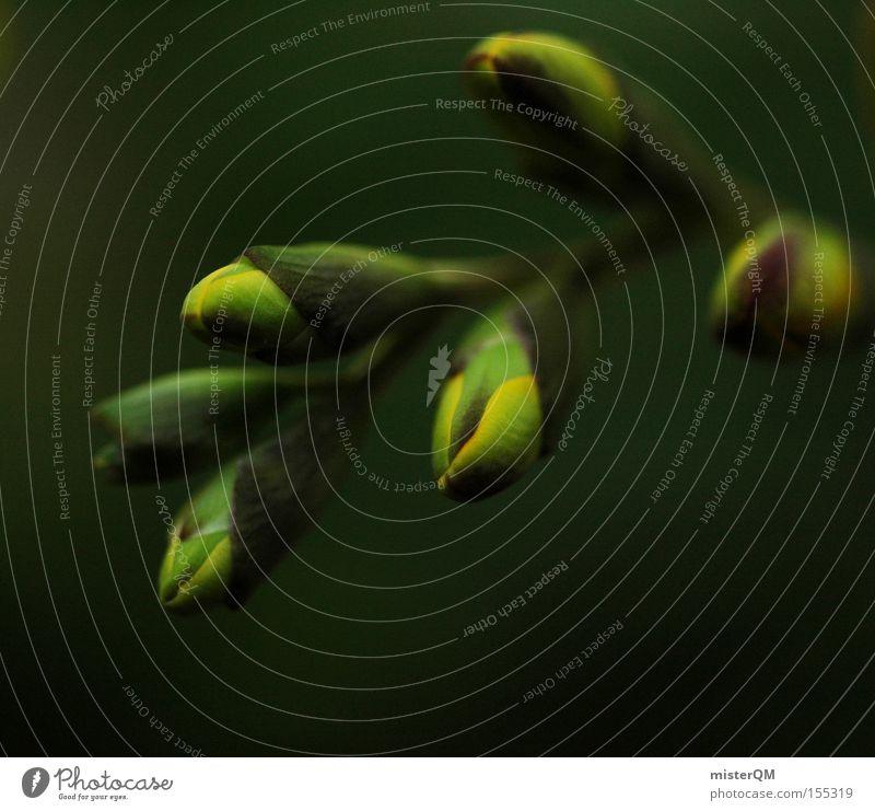Awakening. Natur schön Blume grün Farbe Leben Blüte Frühling Farbstoff Beginn frisch ästhetisch Konzentration Blütenknospen Geburt Blattknospe