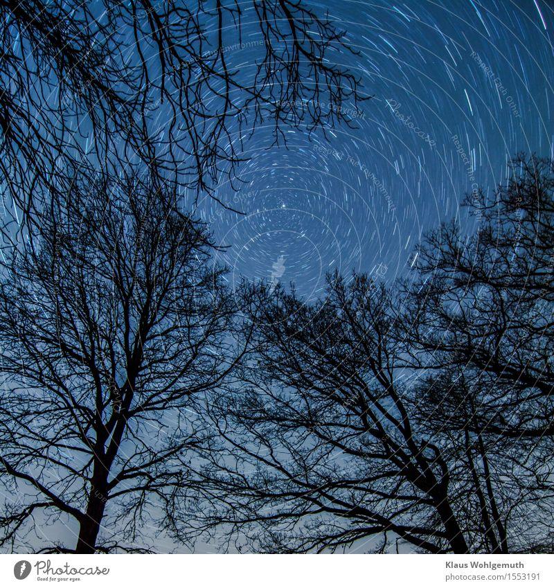 Der Strudel der Zeit Natur Pflanze Himmel Wolkenloser Himmel Nachthimmel Stern Winter Baum drehen blau schwarz weiß rotieren Polarstern Farbfoto Außenaufnahme
