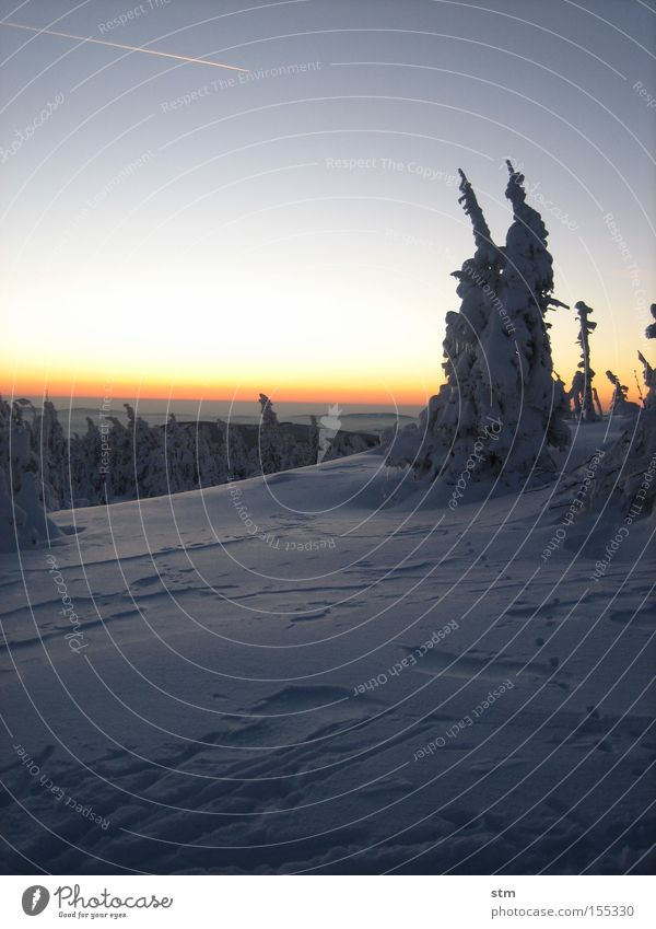 märchenwald Baum Winter Wald Berge u. Gebirge Schnee Horizont Romantik Textfreiraum Hügel Wolkenloser Himmel Tanne malerisch Schneelandschaft Tal Nadelwald