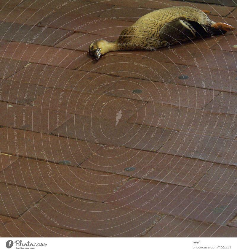 Ente Tier Tod Traurigkeit Vogel elegant Trauer Ende Flügel Vergänglichkeit Wildtier Kopfsteinpflaster Pflastersteine Leiche Mord Tür