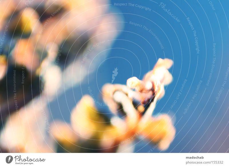 Frühlingserwachen Himmel Blume blau Pflanze Leben Blüte Hoffnung Wachstum Vergänglichkeit