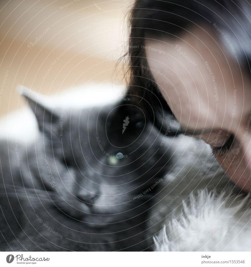 zusammen ausruhen Lifestyle Freizeit & Hobby Frau Erwachsene Leben Gesicht Auge 1 Mensch Haustier Katze Tiergesicht Blick schlafen kuschlig weich Gefühle