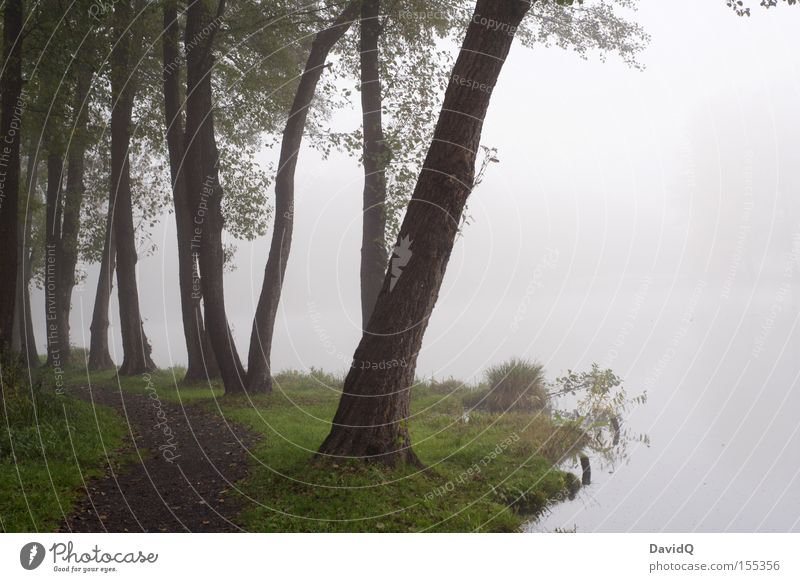 am rand stehen Natur Baum ruhig kalt Herbst Wege & Pfade See Park Nebel Seeufer Am Rand trüb ungewiss Gewässer unsicher schlechtes Wetter