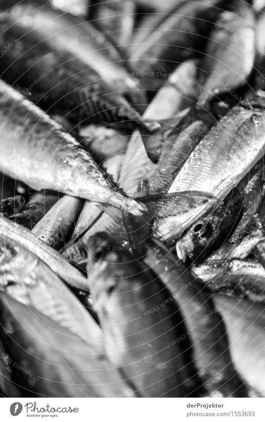Fischerei in Vieira Leiria 16 Natur Ferien & Urlaub & Reisen Pflanze Sommer Meer Landschaft Tier Strand Umwelt Essen Küste Tourismus Angst Wellen Wildtier