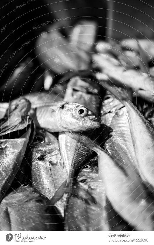 Fischerei in Vieira Leiria 12 Ferien & Urlaub & Reisen Tourismus Ausflug Umwelt Natur Pflanze Tier Sommer Wellen Küste Flussufer Strand Meer Wildtier Totes Tier