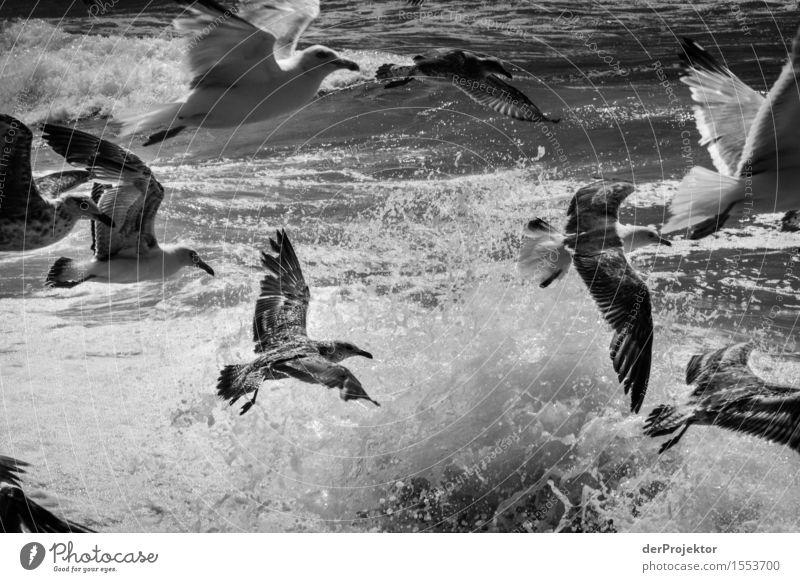 Fischerei in Vieira Leiria 14 Natur Ferien & Urlaub & Reisen Pflanze Sommer Meer Landschaft Tier Ferne Strand Umwelt Küste Vogel Tourismus Wellen Wildtier