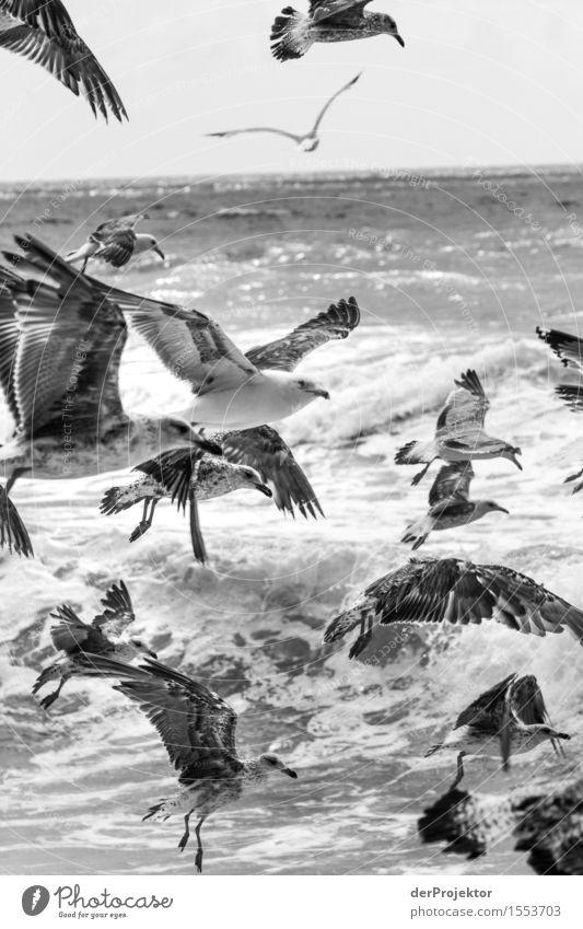 Fischerei in Vieira Leiria 17 Natur Ferien & Urlaub & Reisen Pflanze Sommer Meer Landschaft Tier Freude Strand Umwelt Küste Vogel Tourismus wandern Wellen Kraft