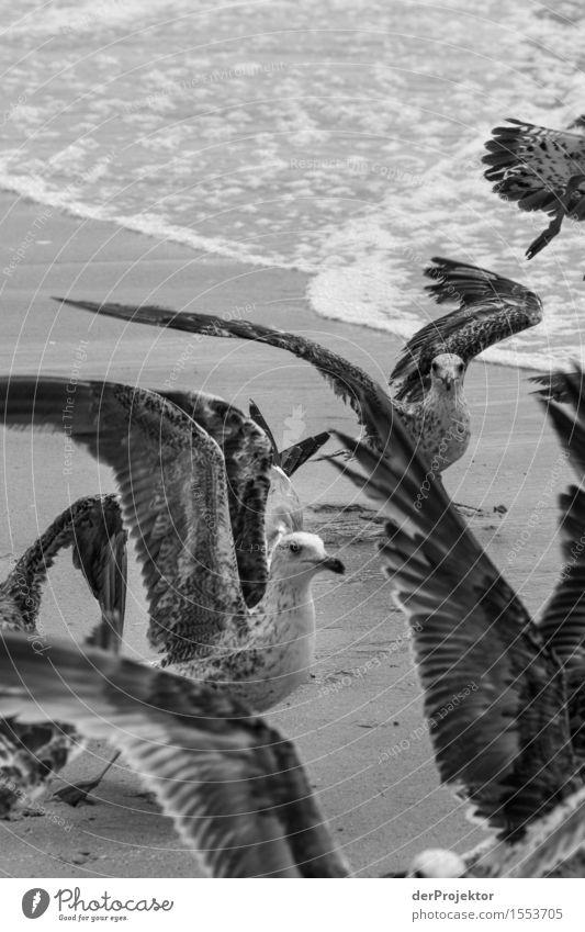 Fischerei in Vieira Leiria 15 Ferien & Urlaub & Reisen Tourismus Ausflug Abenteuer Umwelt Natur Landschaft Pflanze Tier Sommer Wellen Küste Strand Meer Wildtier