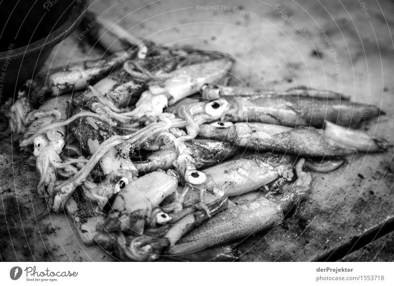 Fischerei in Vieira Leiria 4 Natur Ferien & Urlaub & Reisen Sommer Meer Tier Strand Umwelt Auge Küste Tourismus frisch Wellen Wildtier Ausflug Sauberkeit