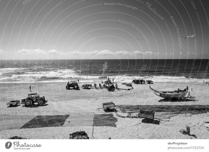 Fischerei in Vieira Leiria 1 Himmel Ferien & Urlaub & Reisen Sommer Meer Strand Umwelt Gefühle Küste Arbeit & Erwerbstätigkeit Tourismus Wellen Kraft