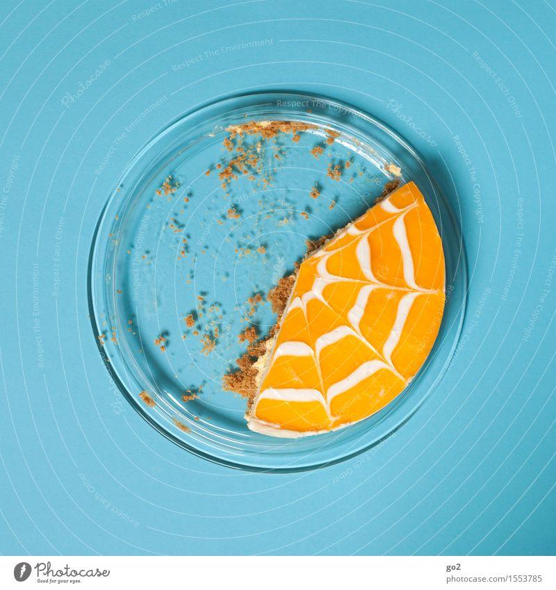 Kuchen 1 blau gelb Essen Feste & Feiern Lebensmittel Frucht orange Geburtstag Ernährung Orange ästhetisch genießen Lebensfreude süß rund Ostern