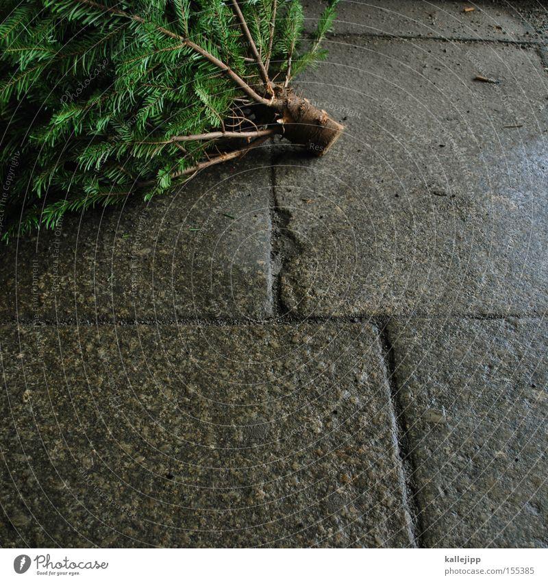 knut Weihnachten & Advent Baum Baumstamm Symbole & Metaphern Bürgersteig Zweig Tanne Christentum Fuge Nadelbaum Müll Tannennadel Biomüll Sammelstelle