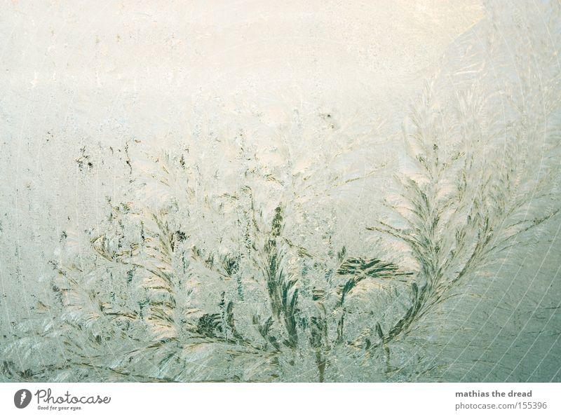 EISBLUMEN Eisblumen Schnee Winter Fensterscheibe Scheibe Glas kalt gefroren feucht schön Kristallstrukturen Kristalle Schneekönigin Frost frieren